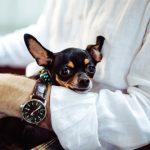 犬系男子の特徴と恋愛攻略方法