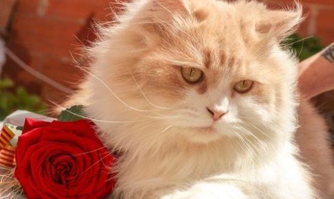 猫系女子の特徴とは