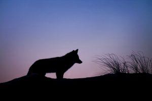 一匹狼系男子を落とすコツ